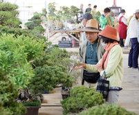 盆栽など1万点ずらり 高松・鬼無で展示即売 愛好家らが品定め