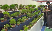 盆栽の魅力知って 高松・鬼無と国分寺で催し