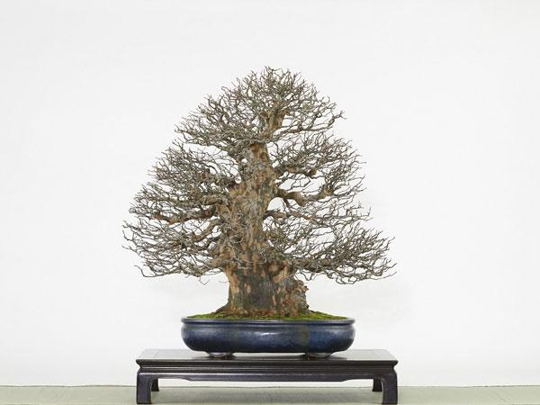 ��36��������������� ���bonsai