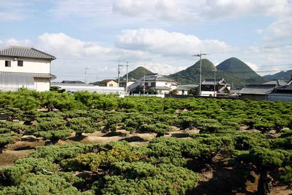 高松市国分寺町に広がる盆栽畑