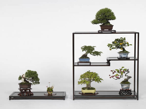 The ''shohin'' bonsai work that won the prize of the director general of the farm ministry's Agricultural Production Bureau. It is owned by Mitsuyuki Yamamoto from Shindencho in the city of Marugame, Kagawa Prefecture.