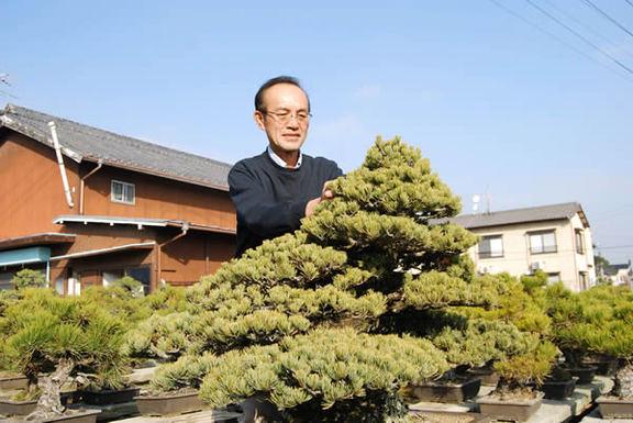 樹齢80年の五葉松と北谷和彦さん=高松市鬼無町、北谷養盛園