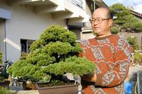 五葉松(4)那須五葉を培養 欧米でも評判の姿と形