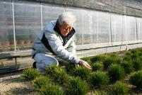 錦松(2)夢錦 15年かけ選んだ新品種