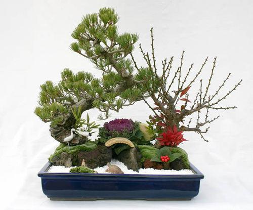 五葉松を主木にした正月の寄せ植え