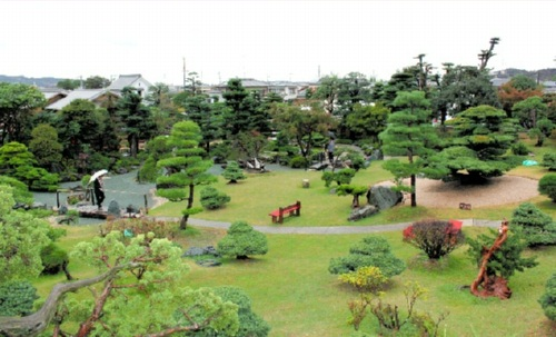 広々とした高砂庵盆栽庭園