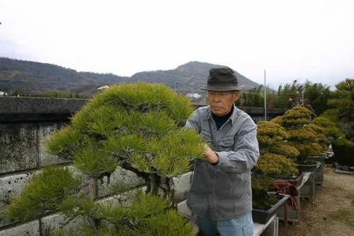 赤松の名木を慈しむ神高藤義さん