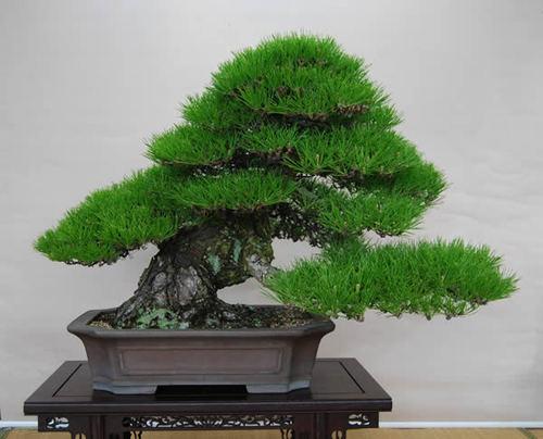 しなやかで風格のある模様木