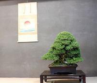 萌雅展が10周年 新春に際立つ粋な展示
