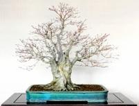 寒樹の美しさ 冬枯れの季節に楽しむ
