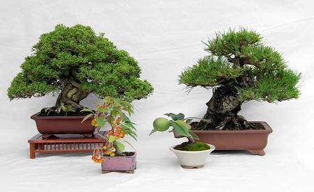 インターネットで販売する盆栽の一例