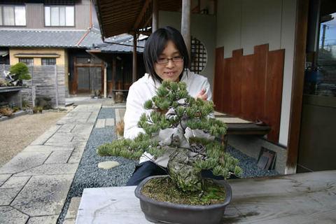 1年前に自分で針金をかけた五葉松の古葉をとる花澤美智子さん