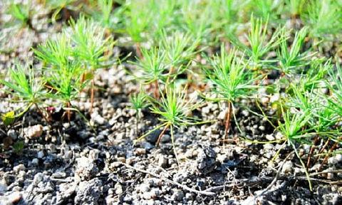 今年3月に種をまいた苗