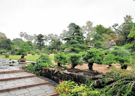 広大な高砂庵盆栽庭園