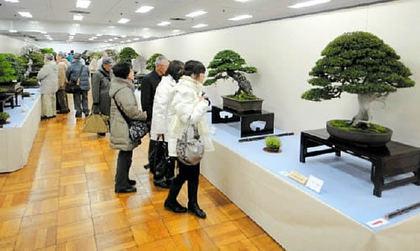 国風盆栽展の会場=東京都立産業貿易センター台東館