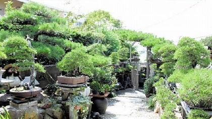 丹精した盆栽が並ぶ庭