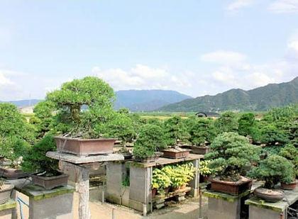 雲辺寺山(左奥)が見える棚場