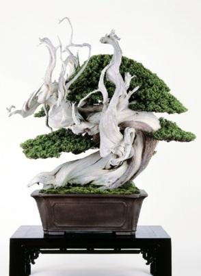 シンパクの銘樹「風神」