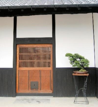 玄関で客を迎える多幹の黒松