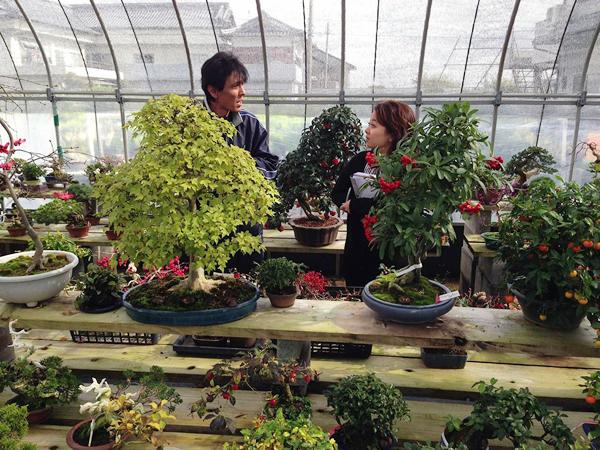 Report Of Bonsai Nursery Hometown